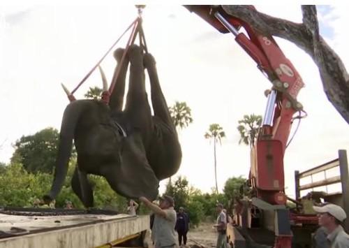 20072016-elephants1