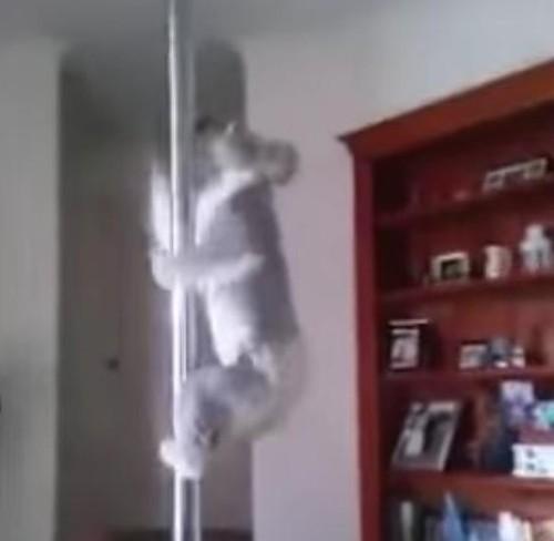 20072016-koala1