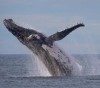 21072016-whale-s