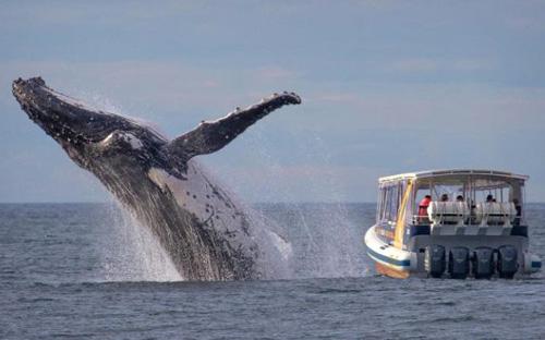 21072016-whale