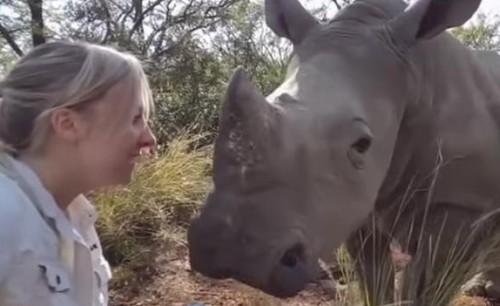 26072016-rhino