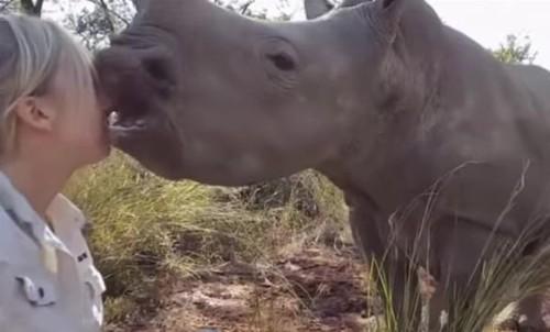 26072016-rhino1