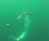 27072016-sharks-s