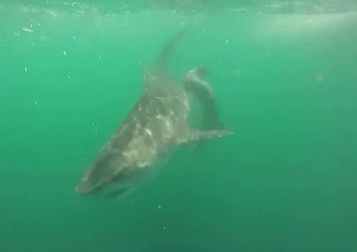 27072016-sharks1