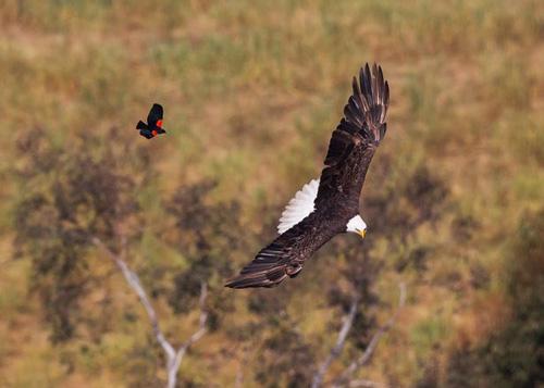 03082016-blackbird3