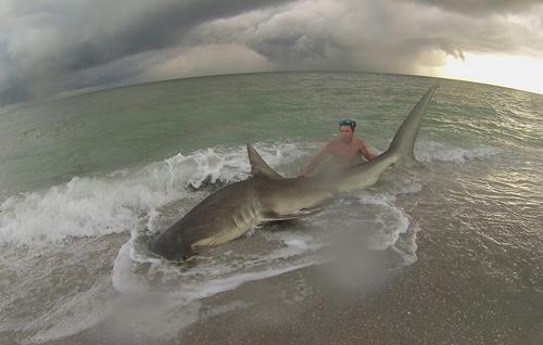 03082016-shark1