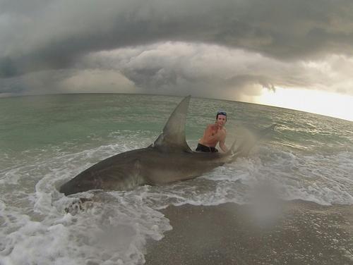 03082016-shark2