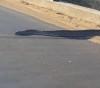 05082016-python-s