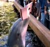 10082016-dolphin-s