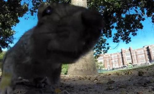 10082016-squirrel1