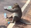 11082016-monkey-s