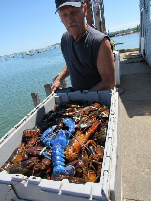 12082016-lobster