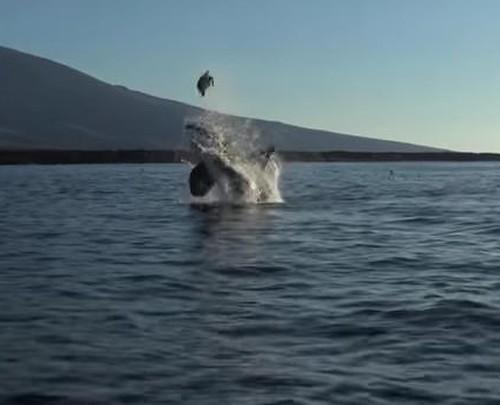 15082016-orca
