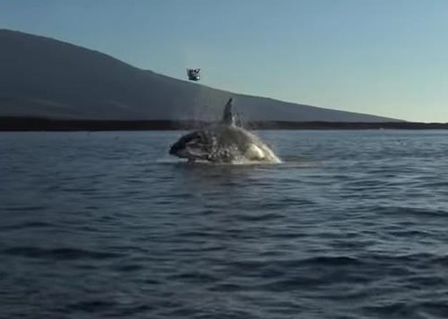 15082016-orca1
