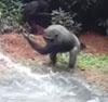 19082016-chimp-s