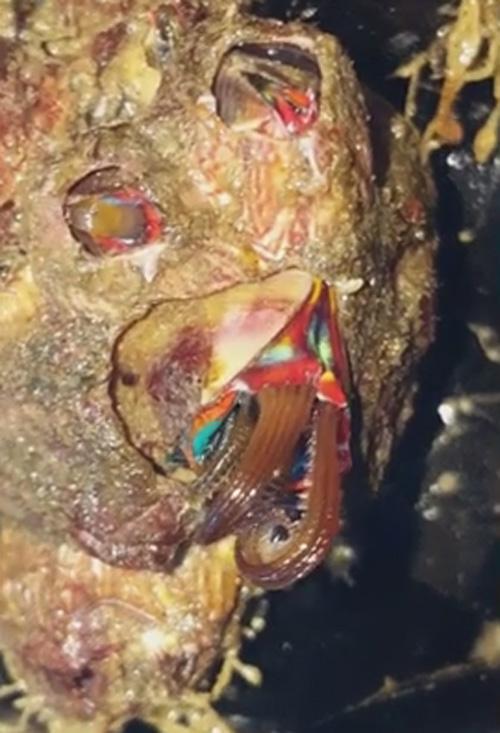 23082016-barnacle1