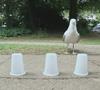 23082016-seagull-s