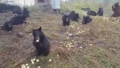 25082016-bearcubs1