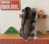 25082016-hamster-s