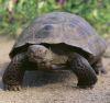 26082016-tortoise-s
