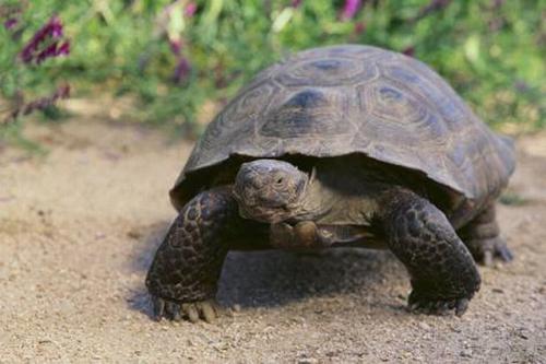 26082016-tortoise