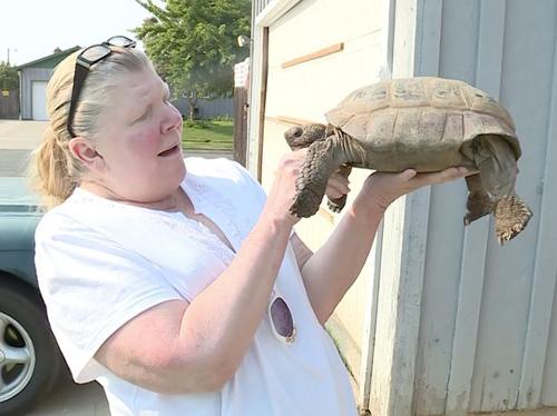 26082016-tortoise1