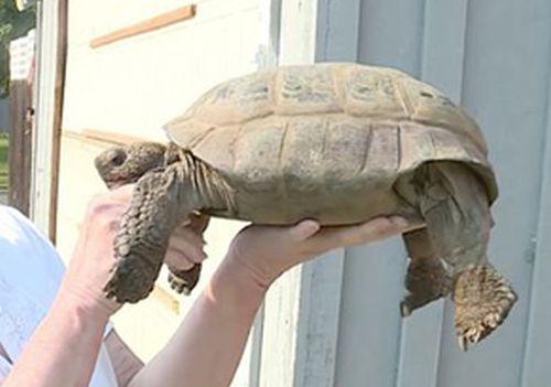 26082016-tortoise2
