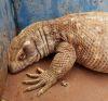 29082016-lizard-s