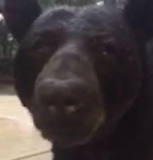 01092016-bearvideo2