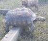 02092016-tortoise-s