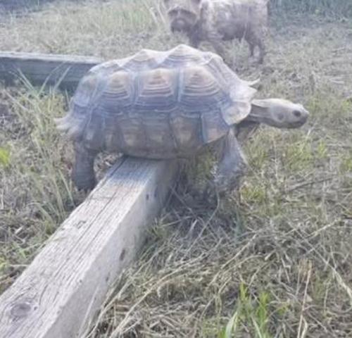 02092016-tortoise