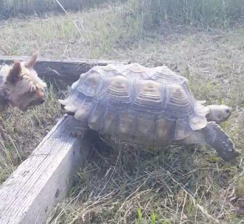 02092016-tortoise1