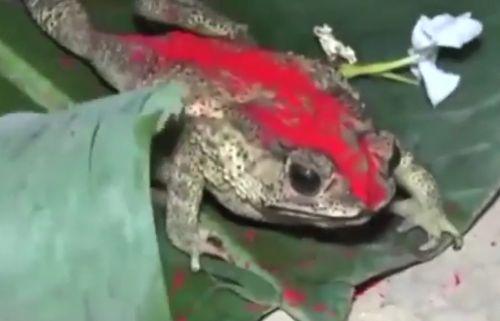 05092016-frogwedding