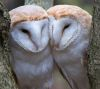06092016-owls-s
