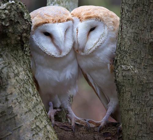 06092016-owls