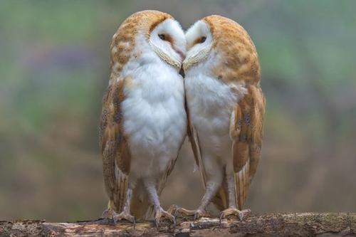 06092016-owls1
