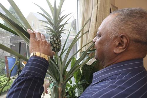 06092016-pineapple