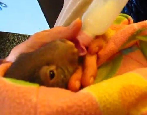 07092016-wombat