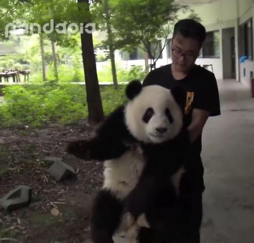 14092016-panda