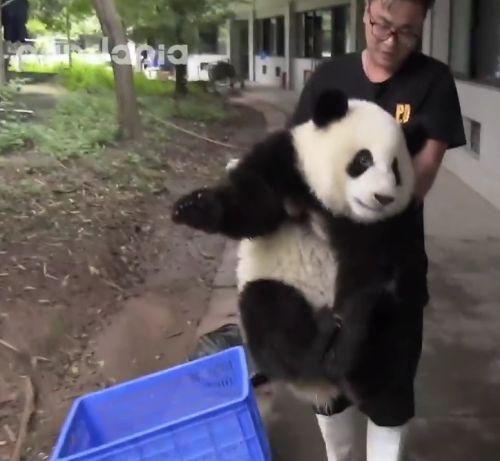 14092016-panda1