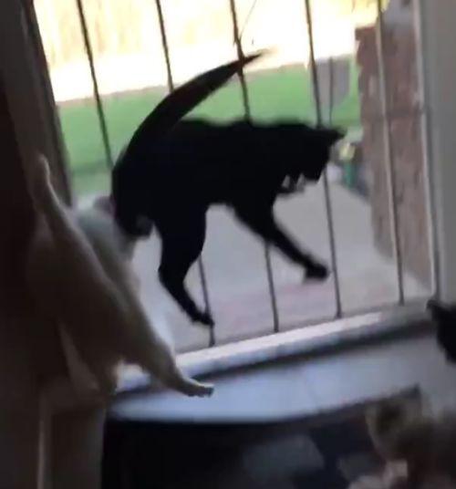 14092016-scaredycats2