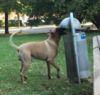 16092016-cleaningdog-s
