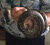 20092016-snake-s