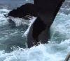 20092016-whale-s