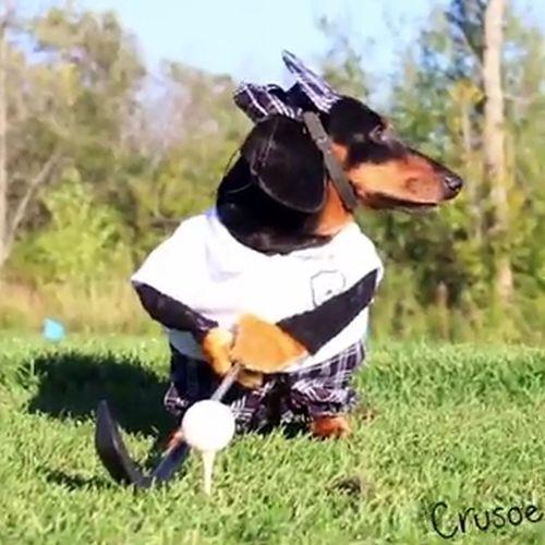 23092016-dachshunds1