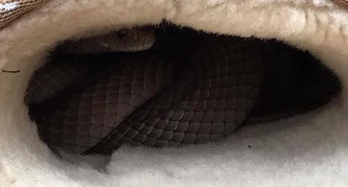25092016-snakeinugg1
