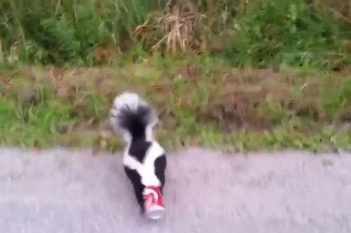 27092016-skunk
