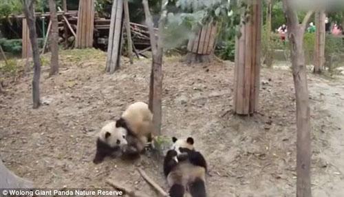 03102016-panda