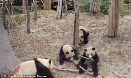 03102016-panda2