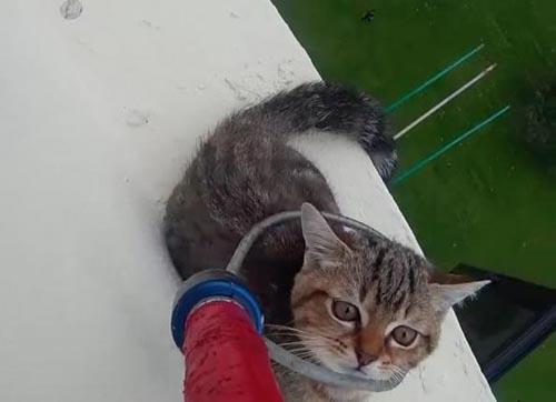 05102016-kittenrescued1
